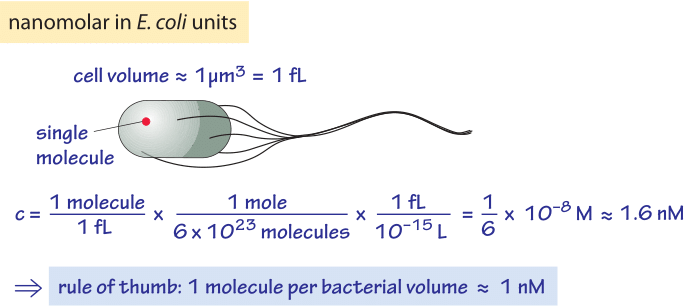 Figure 2: Rule of thumb for converting concentrations into absolute copy numbers per cell. Absolute copy numbers are usually more intuitive and easier to remember. As shown in the calculation, a concentration of one nM is equivalent to about one molecule in a cell volume of 1 μm3. From this rule of thumb it is easy to scale for other concentrations and other cell sizes.