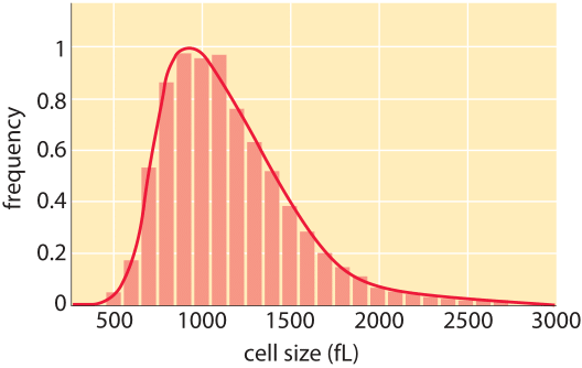 How big is a human cell?