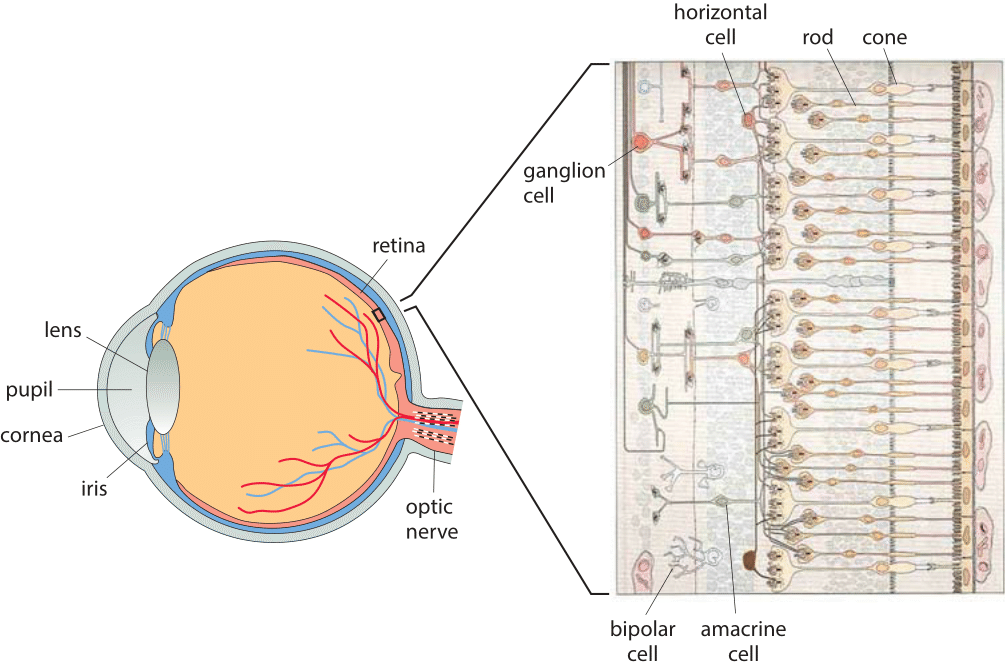130-f3-EyeRetina-1