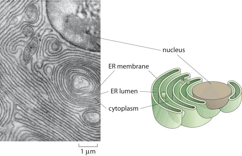 150-f1-EMMicrograph-1