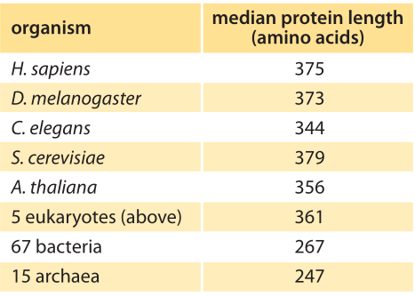 How Big Is The Average Protein