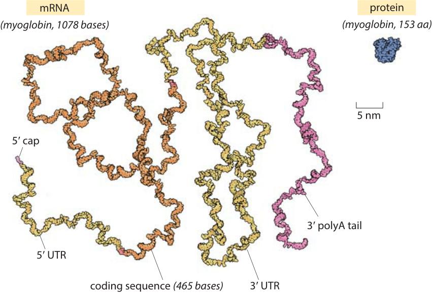 180-f1-mRNAvsProtein-1