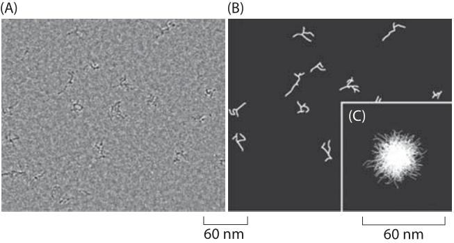 180-f2-mRNASize-1