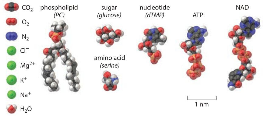 Figure 1: A structural view of some of the basic constituents of a cell.