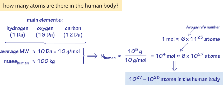 what is the elemental composition of a cell?, Human Body
