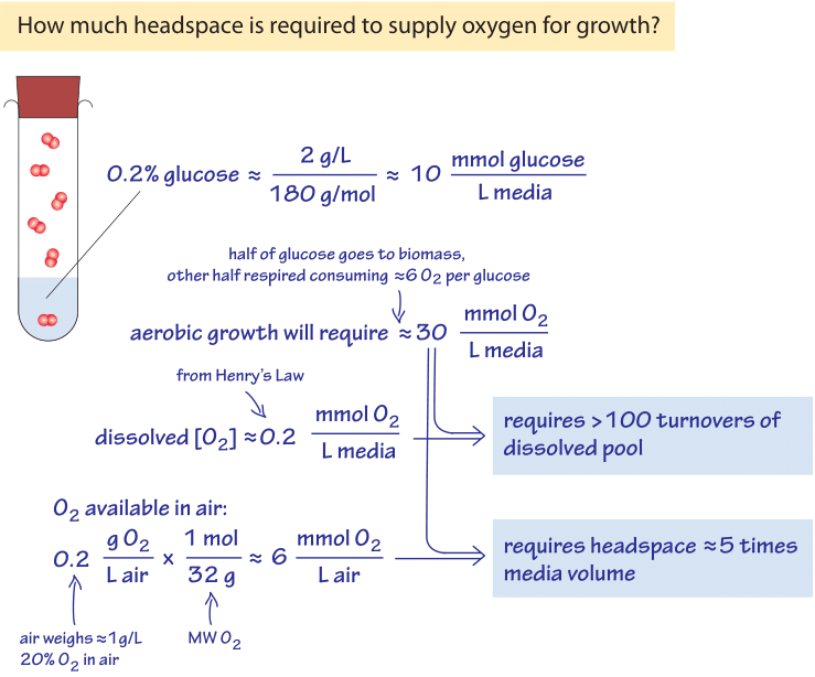 Figure 3: Back of the envelope calculation on the oxygen availability for growth in liquid media & the growth chamber headspace filled with air.