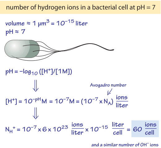 Figure 2: Back of the envelope calculation of the number of hydrogen ions in a typical bacterial cell volume.