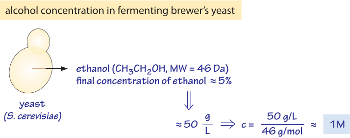 240-f2-EthanolProductionByYeastCalc-1