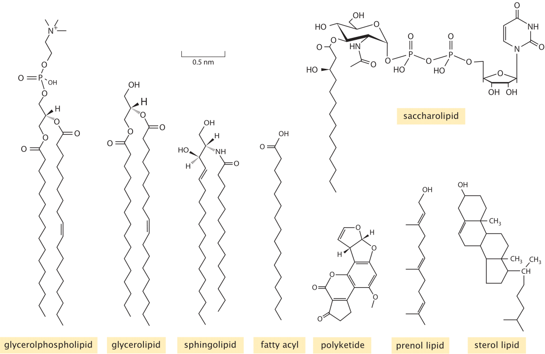 There Are Several Types Of Membrane Proteins They Are Hard To Produce