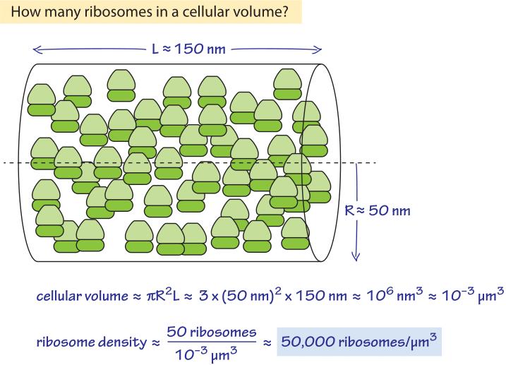 275-f4-RibosomeDensityCalc-1