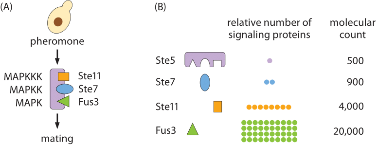 290-f6-YeastSignalingProteins-1