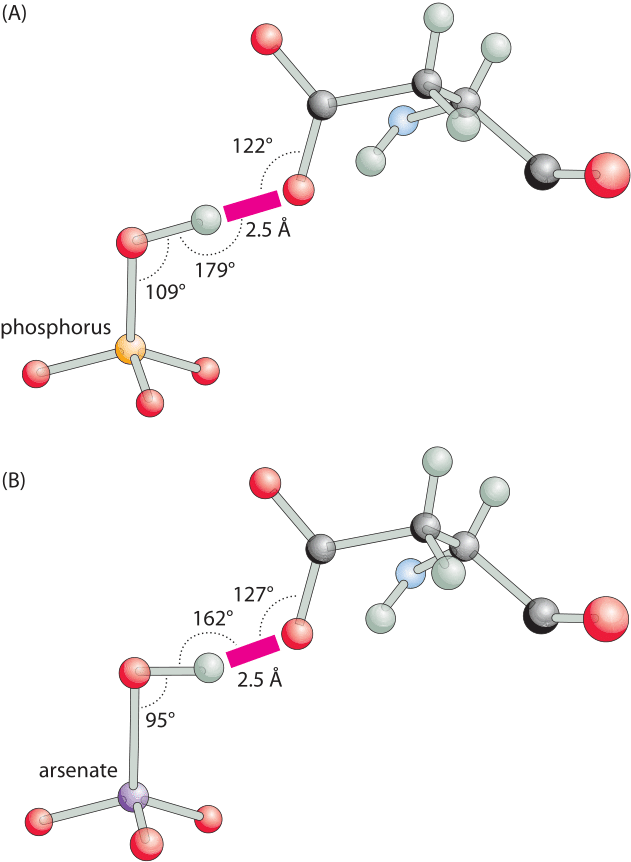Hydrogen Bonds in Proteins Role and Strength