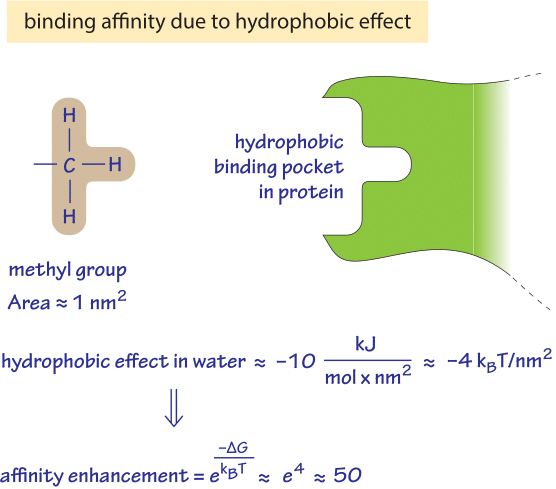 Figure 1: Back of the envelope calculation of what increase in binding affinity one could expect from the hydrophobic effect resulting from a single methyl group buried in a hydrophobic binding pocket.