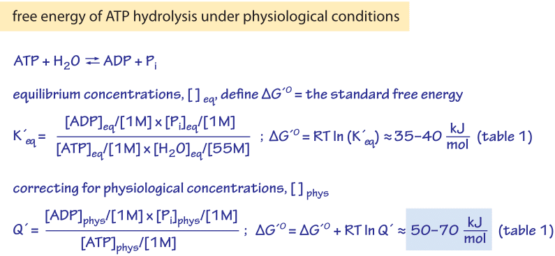Figure 1: The relation of the Gibbs free energy of ATP hydrolysis under standard conditions to the equilibrium constant, and the relation of the free energy of hydrolysis under physiological conditions to the physiological reactants concentrations.