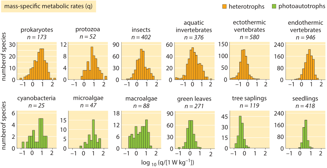 Figure 2 Histograms Of Resting Metabolic Rates Normalized To Wet Weight Across Many Orders