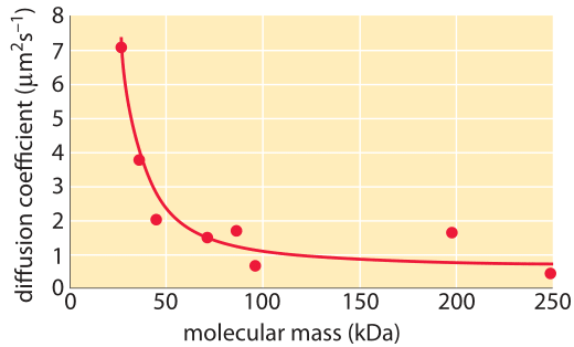 Figure 6: Diffusion constant as a function of molecular mass in E. coli.  The diffusion of proteins within the E. coli cytoplasm were measured using the FRAP technique.   (Adapted M. Kumar et al., Biophysical Journal, 98:552, 2010)