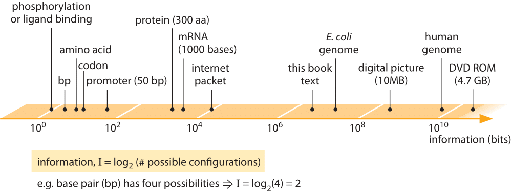 Figure 1: Information content of biological entities and some man made information storage devices. Information is quantified through binary bits, where a base pair which has 4 possibilities is 2 bits etc.