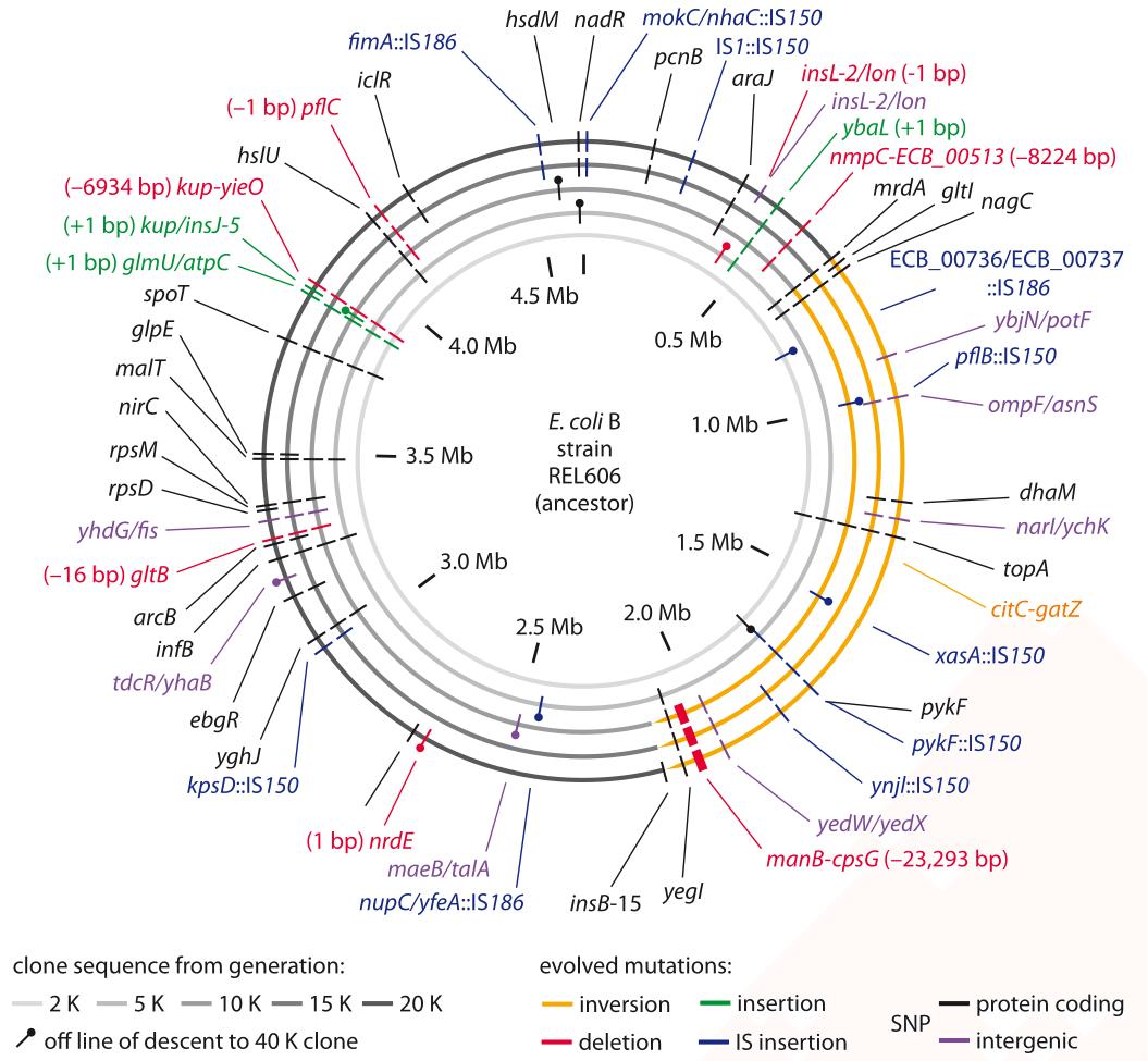 530-f1-MutationsEcoli-1