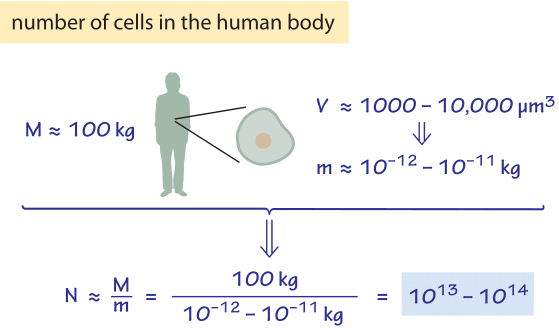 Figure 1: Estimate of the number of cells in a human body based on characteristic volumes.