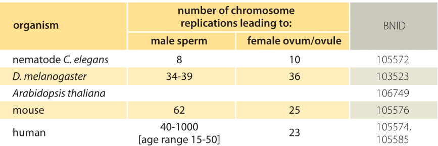 Number of chromosomes in sperm cells