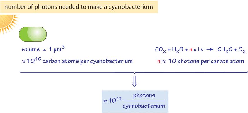 660-f2-PhotonsCyanobacteriumCalc-1