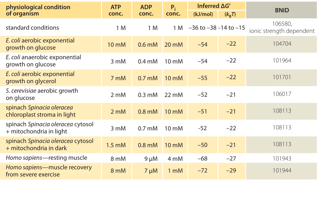 Table 1: Free energy for ATP hydrolysis in various organisms and under different physiological conditions. Inferred ΔG' calculations based on a value of ΔG'0 of -37.6 kJ/mol. This makes the table values consistent among themselves but creates small deviations from the ΔG' values reported in the primary sources. Such deviations can result from variations in ionic strength, pH and measurement methods biases. Values are rounded to one or two significant digits. In spinach, where Pi concentration was not reported, a characteristic value of 10 mM was used (BNID 103984, 103983, 111358, 105540).