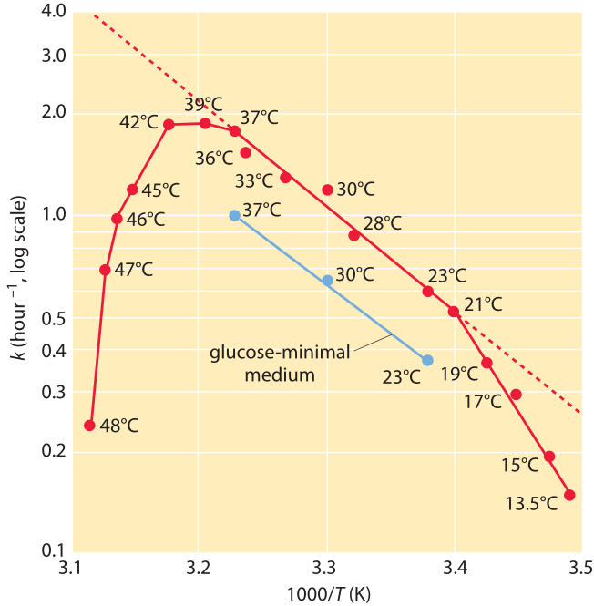 Figure 3: Dependence of the growth rate of E. coli on temperature. The growth rate is plotted versus the inverse of the temperature (an Arrhenius plot). Note the middle range where the dependence looks linear in accordance with Arrhenius rate law. (Adapted from Microbe, M. Schaechter et al., ASM press, 2006 p.63.)